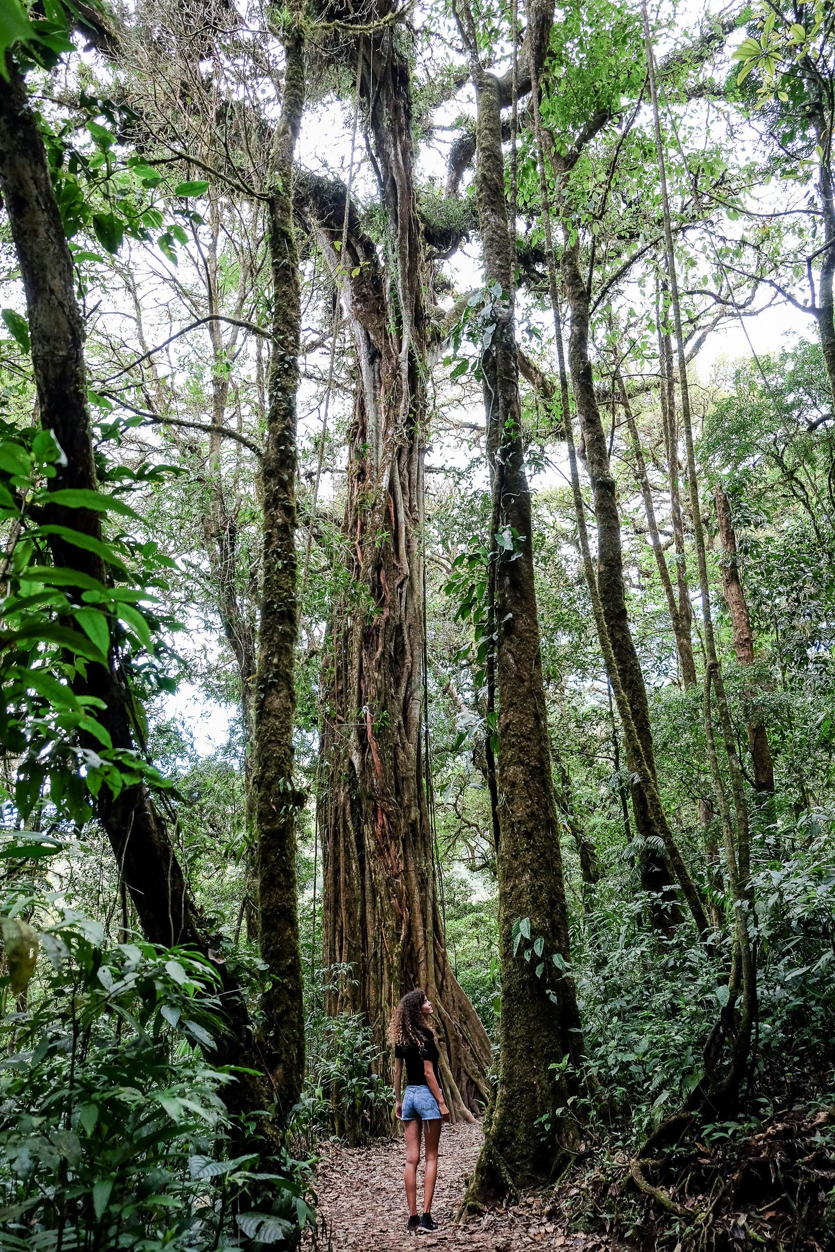 Costa Rica Roadtrip-2
