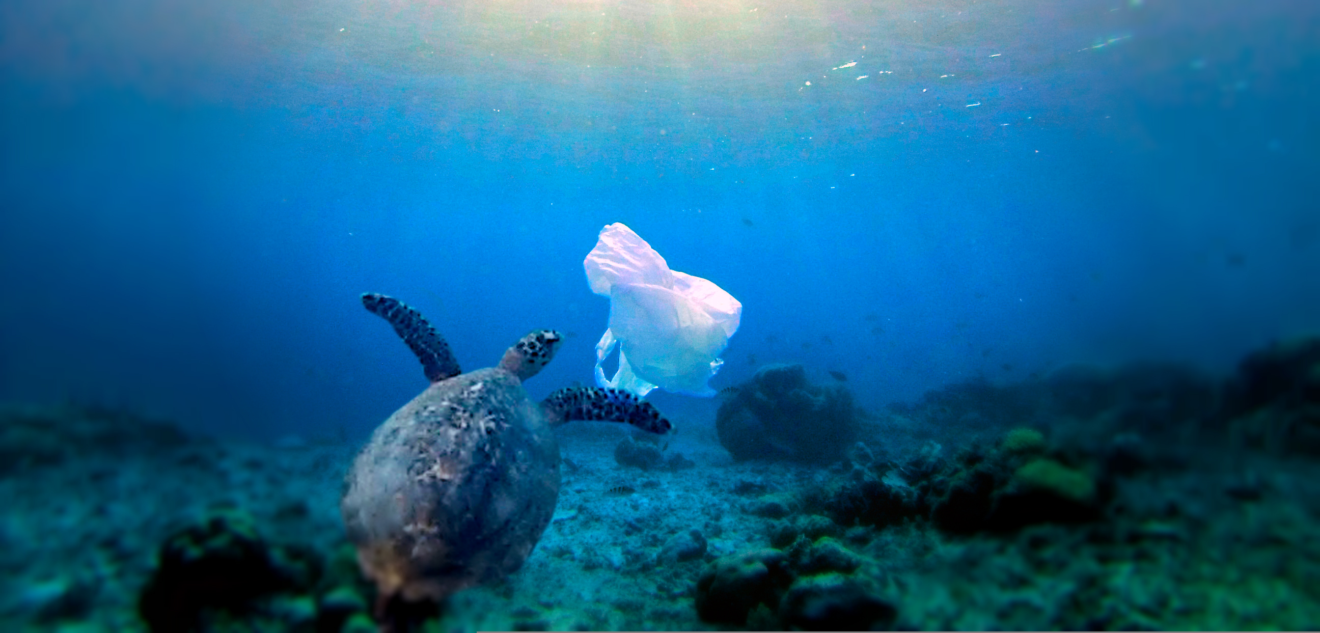 Turtles-mistake-plastic-bags-for-food-e.g.-jellyfish